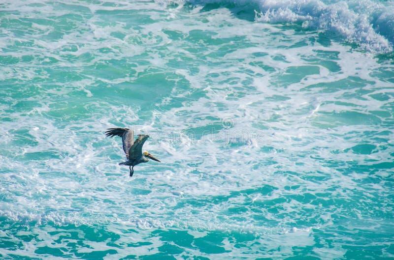 Pelicano que voa sobre o mar cariibean de México fotografia de stock royalty free