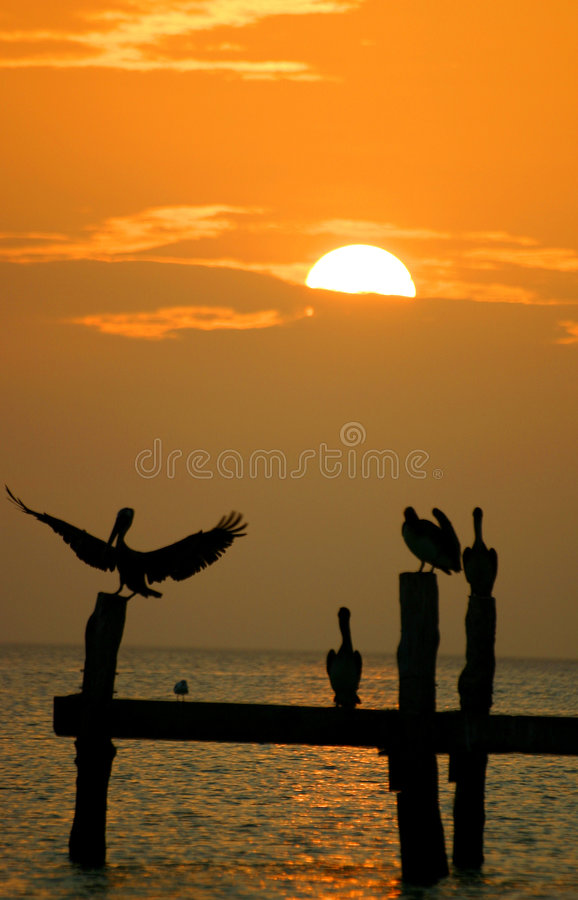 Free Pelicans At Sunset Royalty Free Stock Photo - 3164195