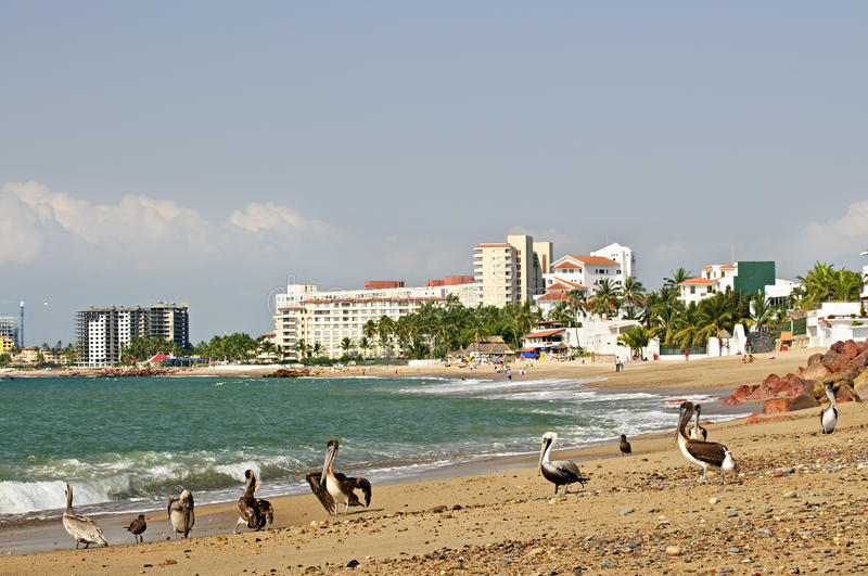 Download Pelicans On Beach In Mexico Stock Image - Image: 15914633