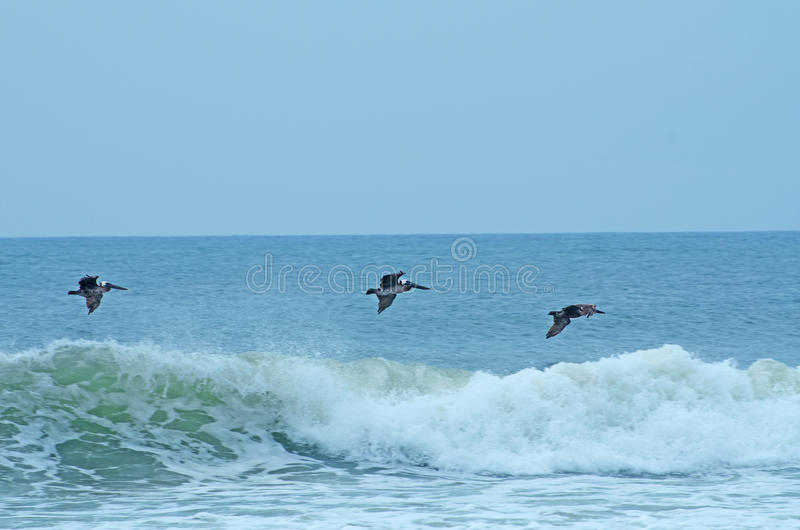 Download Pelicans Flying Over The Ocean Waves Stock Image - Image: 32949465