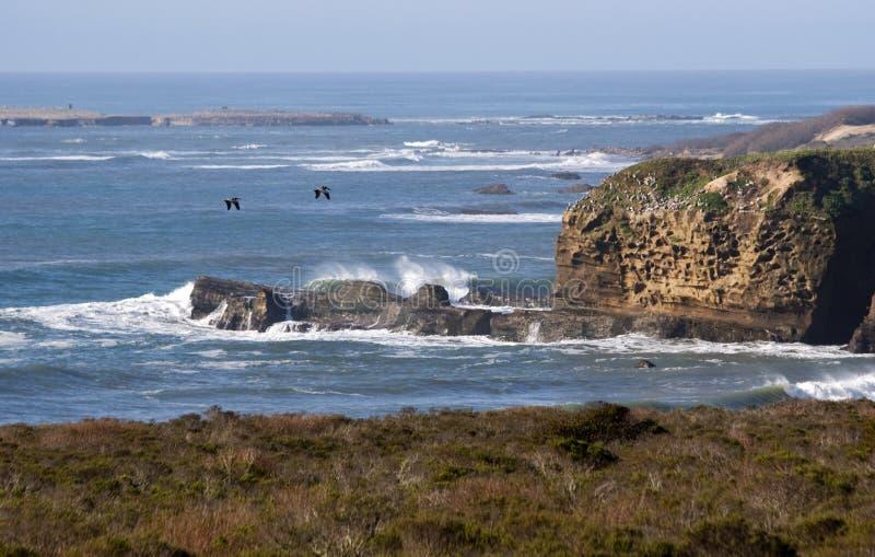 Pelicans over the ocean stock photo