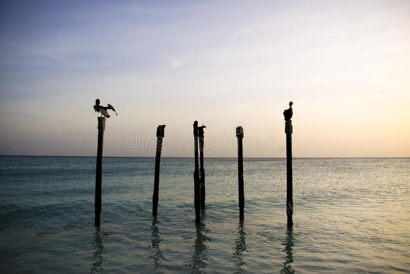 Pelicans resting on Poles stock photo