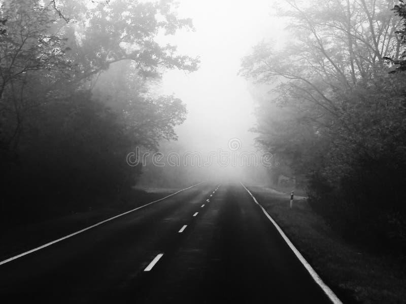 Peligro del camino - niebla imagenes de archivo