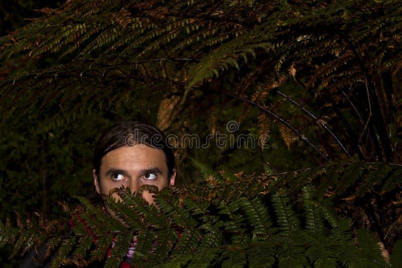 Peligro en bosque imagen de archivo