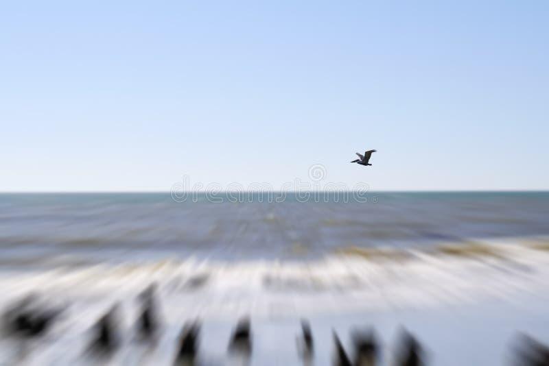 Pelikaan bij Zuiden Carolina Beach royalty-vrije stock afbeeldingen