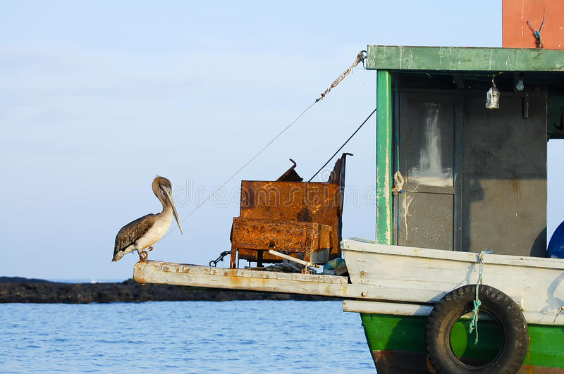 Pelikaan op Boot - de Galapagos - Ecuador stock afbeeldingen