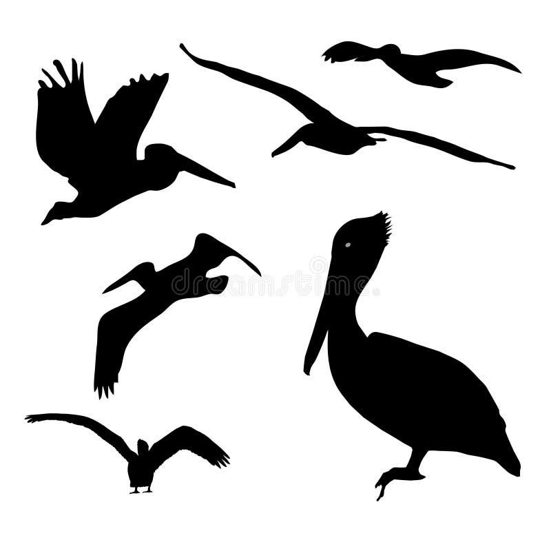 Pelikan-Ansammlung lizenzfreie abbildung