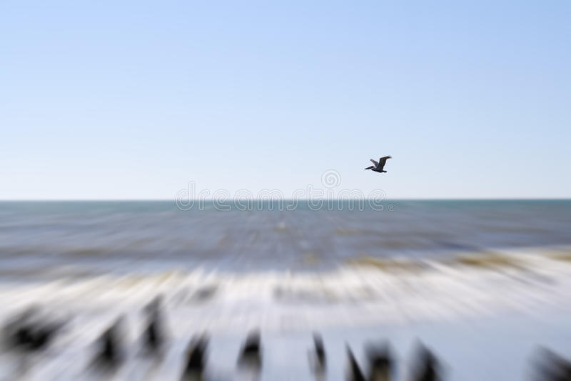 Pelikan bei Süd-Carolina Beach lizenzfreie stockbilder