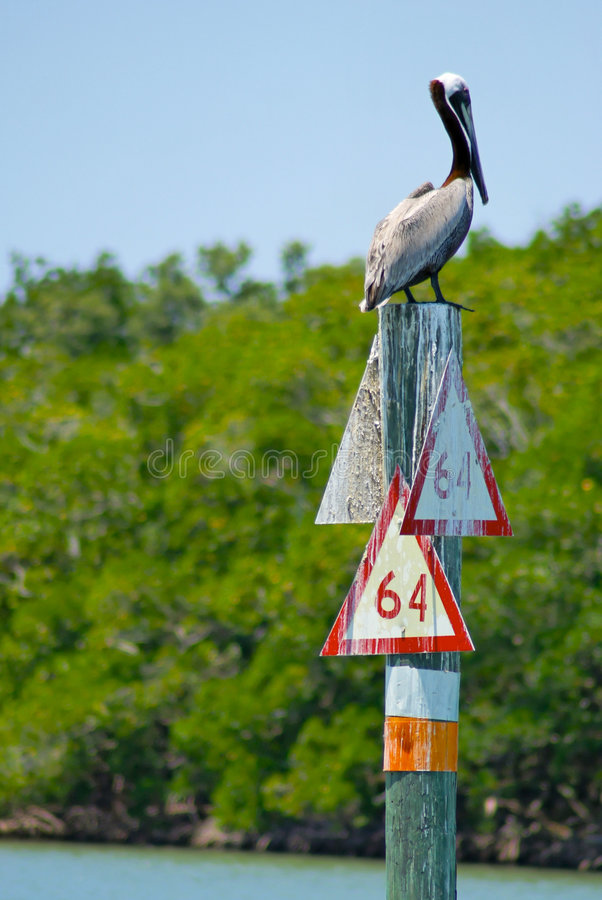 Pelikan hockte auf Pol stockfoto