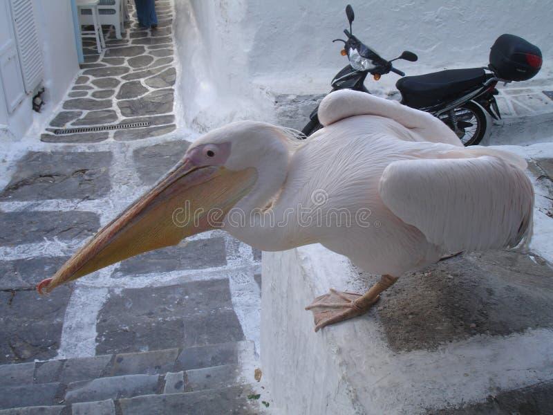 Pelikan i Mykonos, grekiska öar arkivbilder