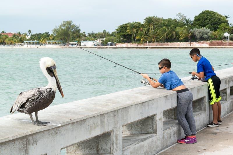 Pelikan och pojkar som fiskar i Key West, Florida tangenter arkivfoto