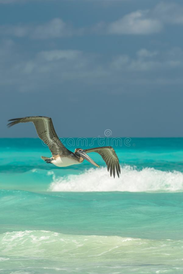 Pelikan przeciw niebieskiemu niebu zdjęcie royalty free
