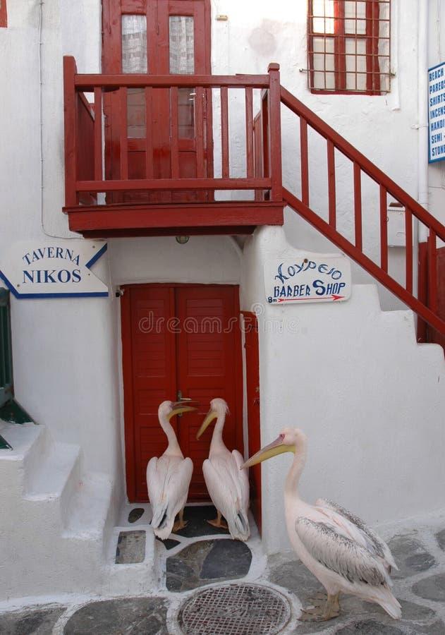 Pelikan som framme väntar av en krog i Mykonos royaltyfri bild