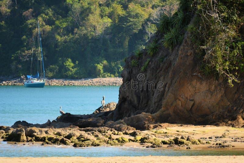 Pelikan som vilar på, vaggar i en liten vik fotografering för bildbyråer