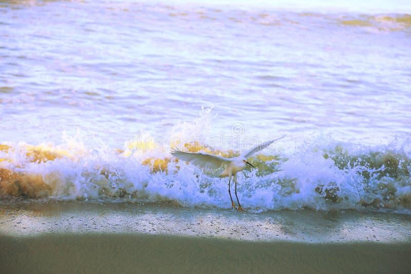 Pelikan w plaży obrazy stock