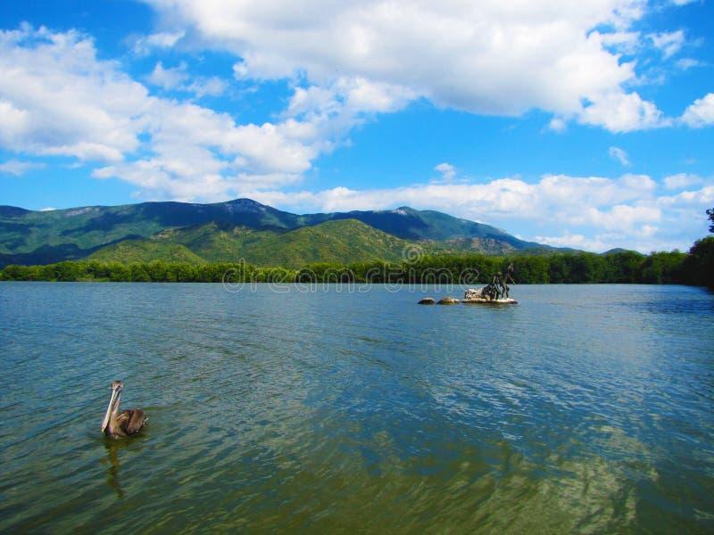 Pelikana jezioro zdjęcie royalty free