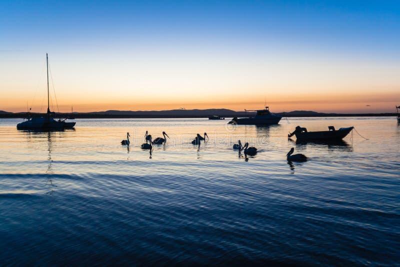 Pelikana Ptaków Silouetted Laguna   zdjęcia stock