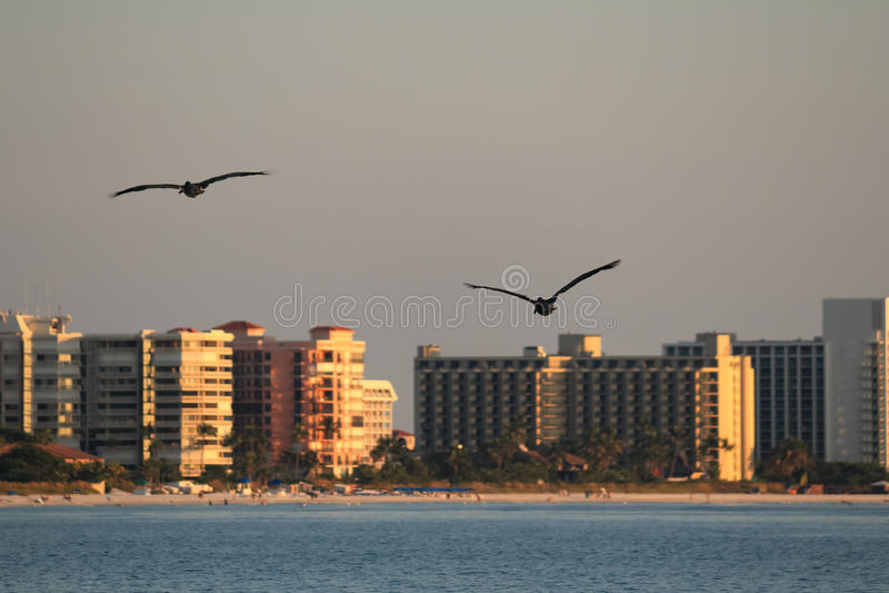 Pelikane bei Sonnenuntergang 3 stockbild