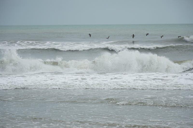Pelikane, die entlang die Wellen fliegen stockfotografie