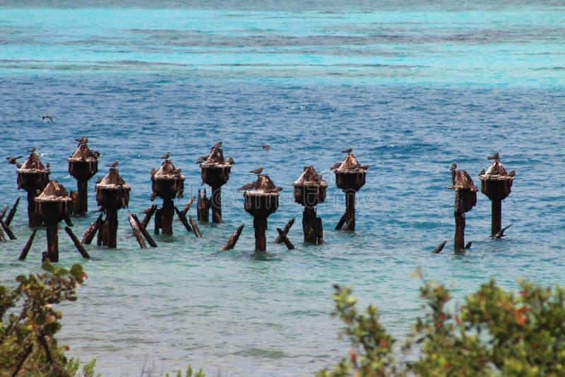 Pelikane gehockt auf Dockruinen stockfotos