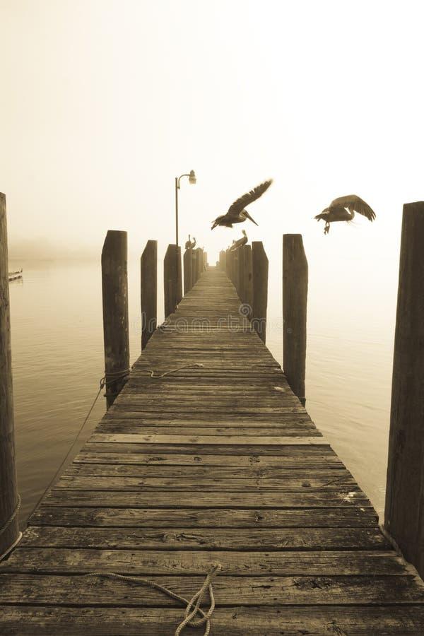 Pelikane am Sonnenaufgang lizenzfreie stockfotografie