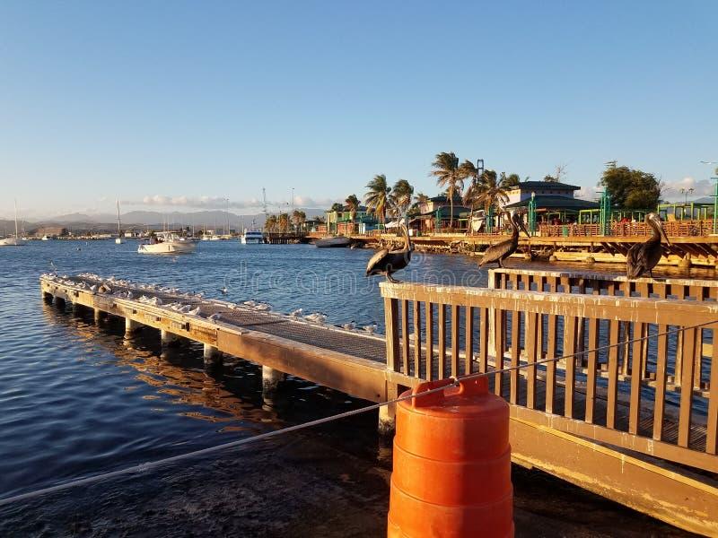 Pelikane und Pier im La Guancha in Ponce, Puerto Rico stockfotografie