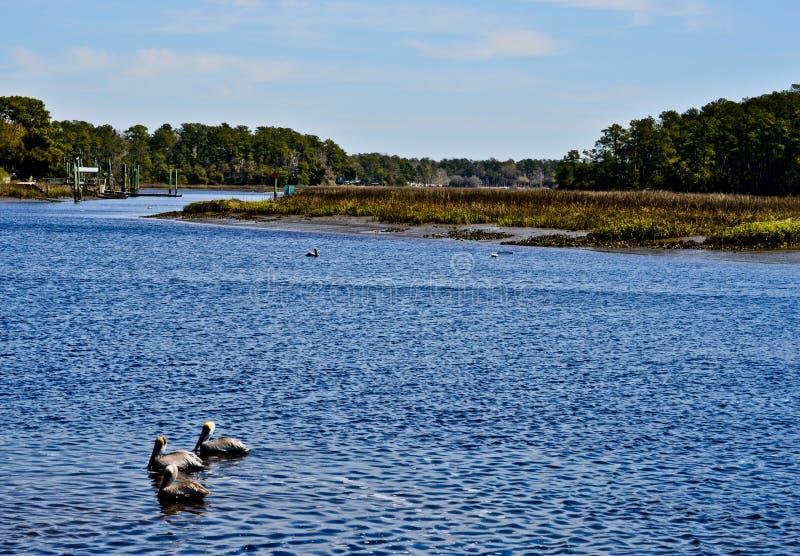 Pelikanen die in de haven drijven royalty-vrije stock foto's