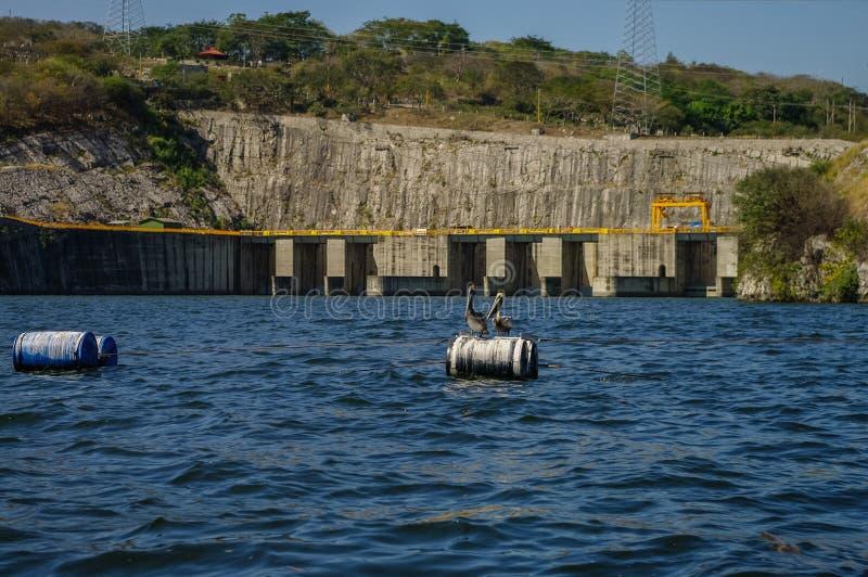 Pelikanen in het Hydro-elektrische Reservoir van Chicoasen in het eind van S stock fotografie