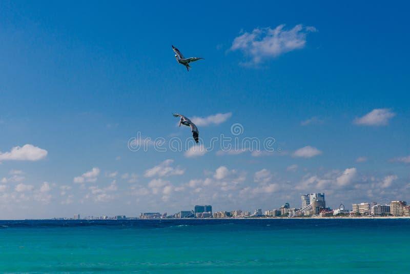 Pelikanen op het strand in cancun, mexico stock foto's