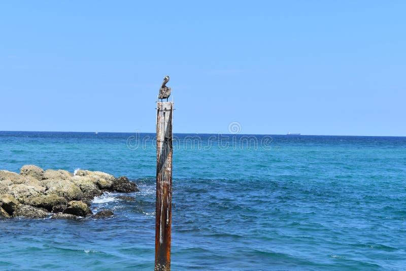 Pelikanvaktpost arkivbilder