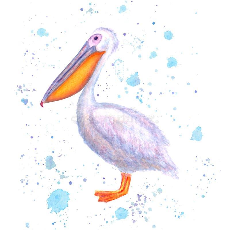 Pelikanvattenfärg Utdragen vit fågel för hand med blåa färgstänk för akvarell som isoleras på vit bakgrund stock illustrationer