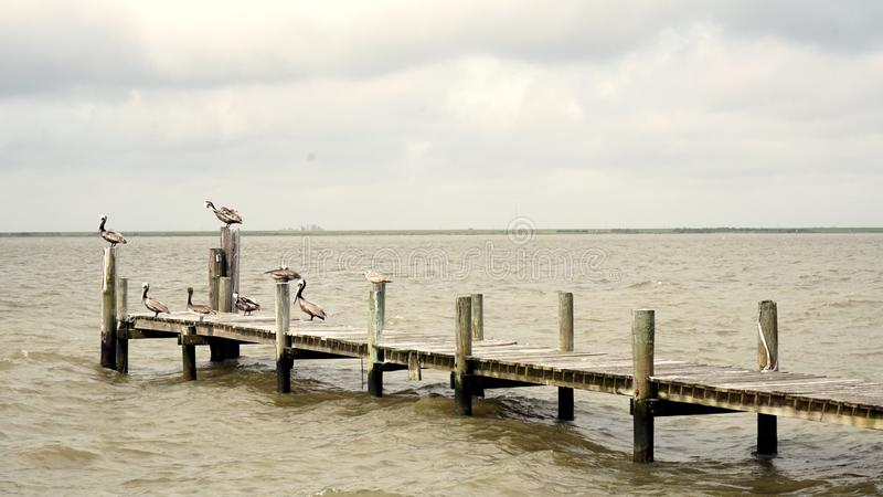 Pelikany Odpoczywa na połowu molu obrazy royalty free