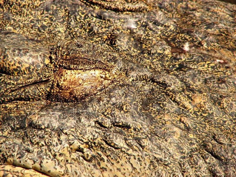 Pellame o cuoio del coccodrillo fotografia stock libera da diritti