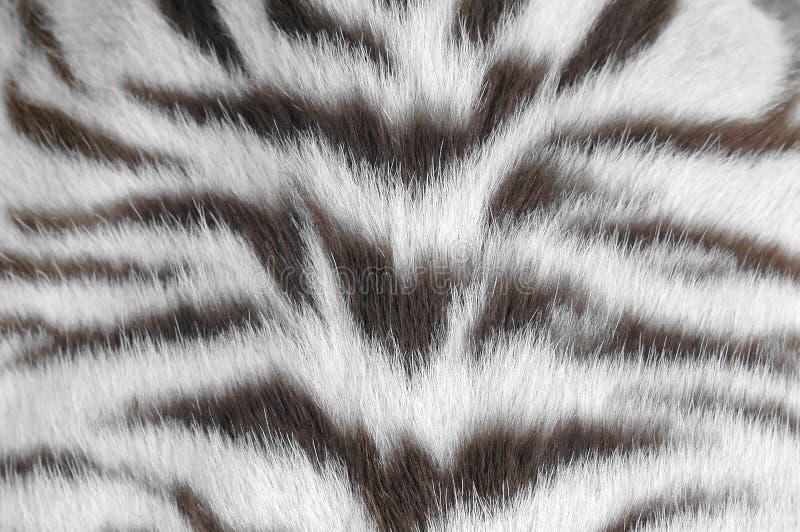 Pelle bianca della tigre fotografia stock libera da diritti