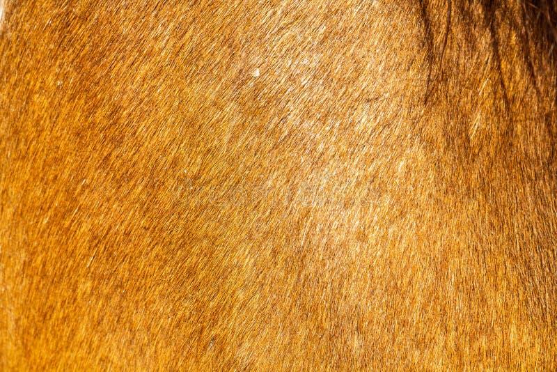 Pelle del cavallo immagine stock