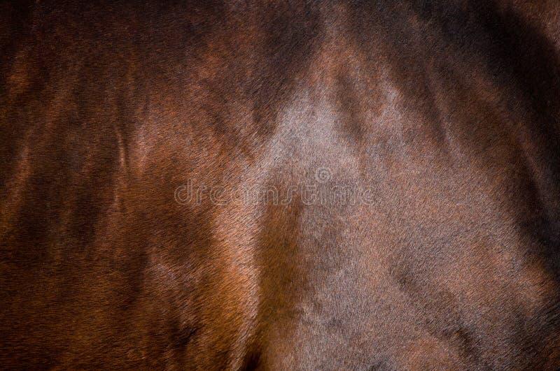Pelle del cavallo di baia fotografia stock libera da diritti