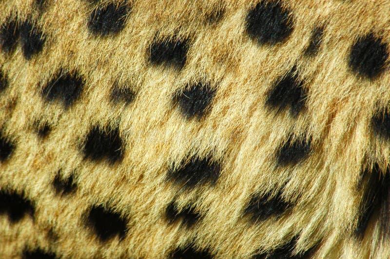 Pelle del ghepardo immagini stock