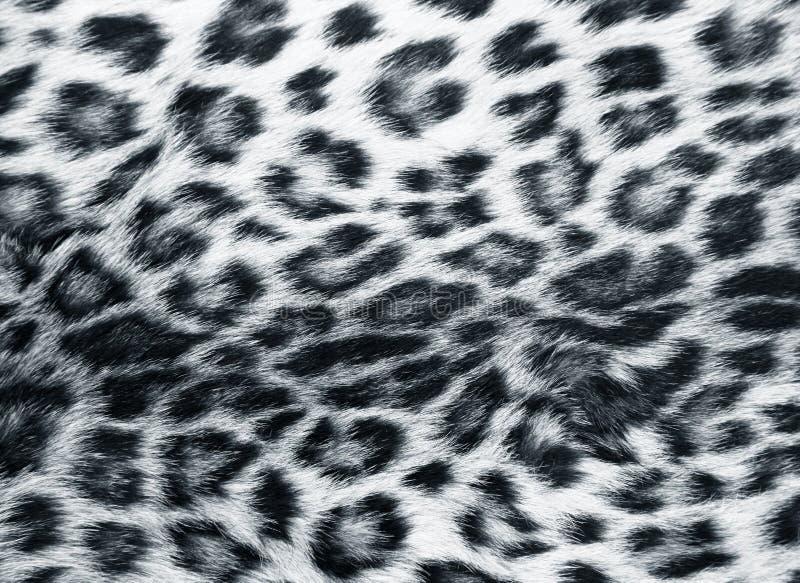 Pelle del leopardo immagine stock