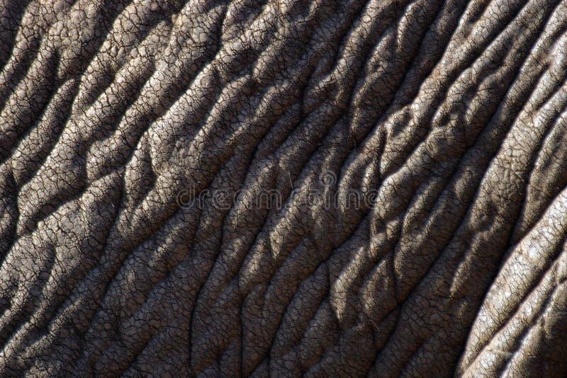 Pelle dell'elefante fotografia stock