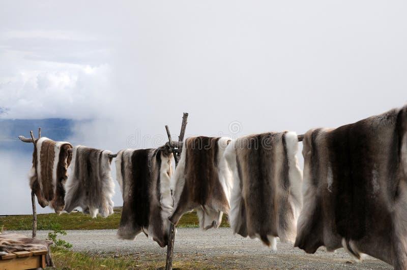 Pelle della renna fotografia stock libera da diritti
