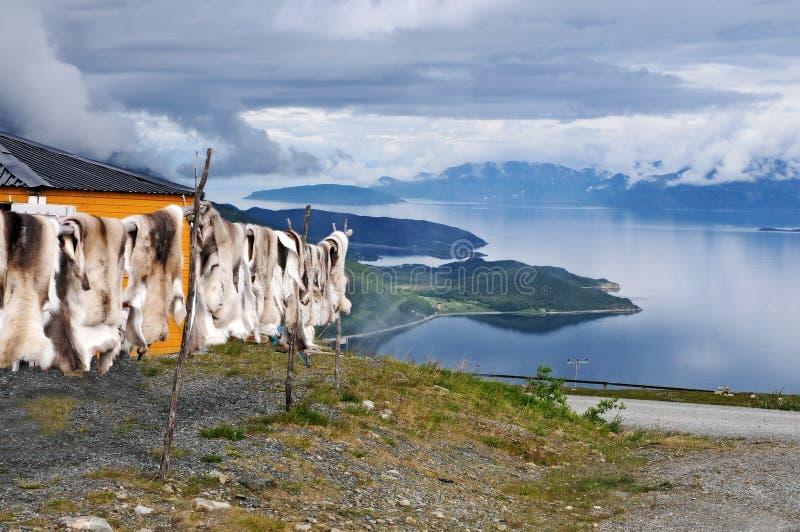 Pelle della renna immagini stock libere da diritti