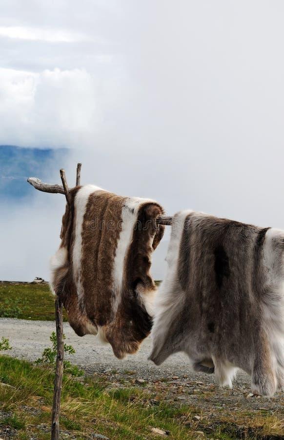 Pelle della renna fotografie stock
