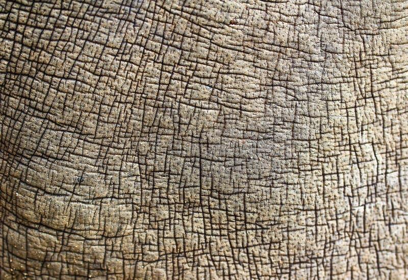 Pelle di rinoceronte fotografie stock libere da diritti