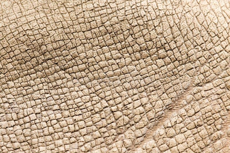 Pelle di rinoceronte come fondo immagine stock libera da diritti