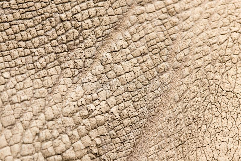 Pelle di rinoceronte come fondo immagini stock