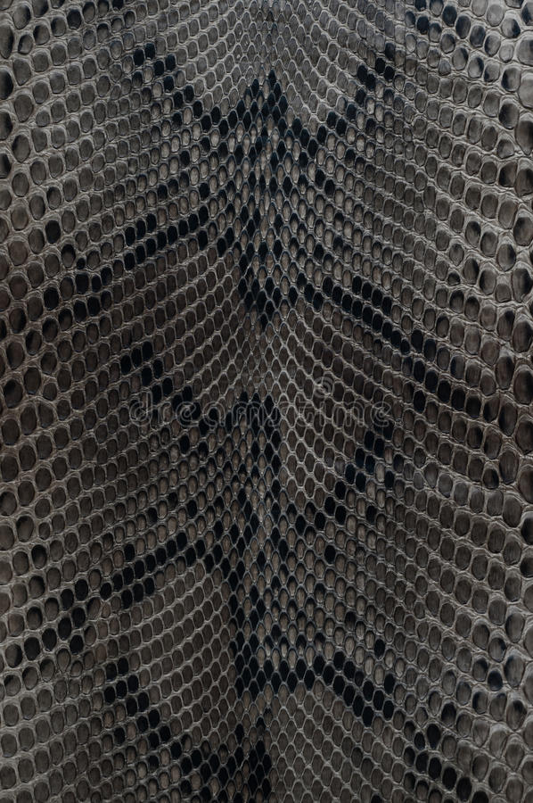 Pelle di serpente immagini stock libere da diritti