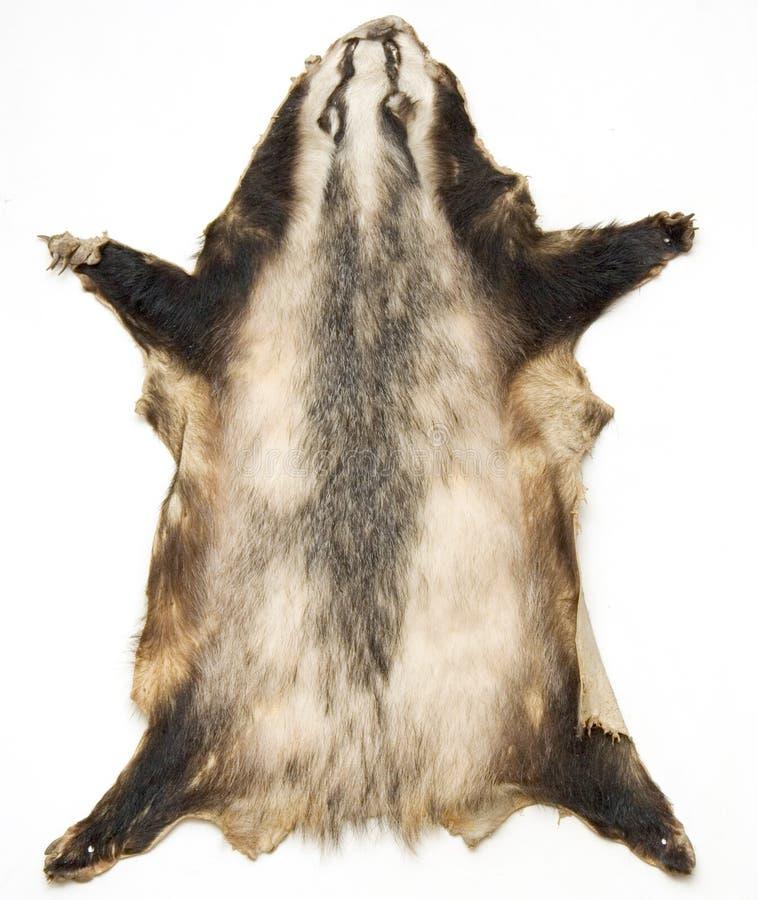 Pelle Di Un Animale Immagine Stock Libera da Diritti