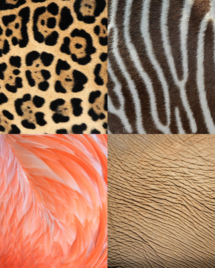 Pelle, pelliccia & piume animali di struttura del reticolo dell'Africa fotografia stock libera da diritti