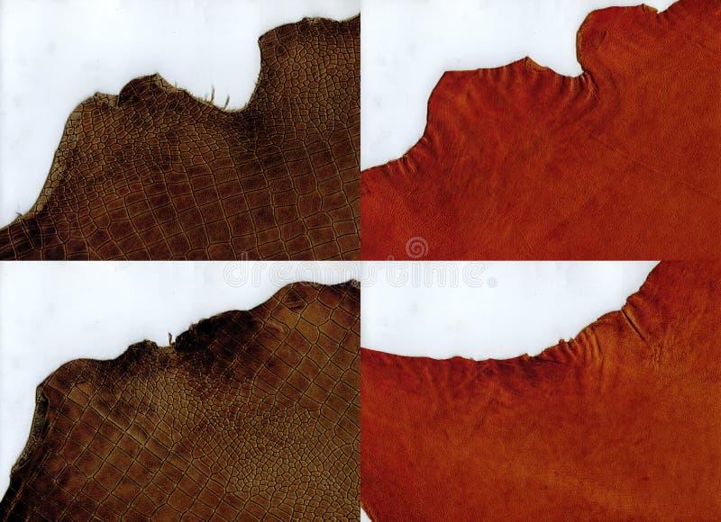 Pelle scamosciata di terracotta dei bordi irregolari e struttura marrone della pelle di coccodrillo immagine stock libera da diritti
