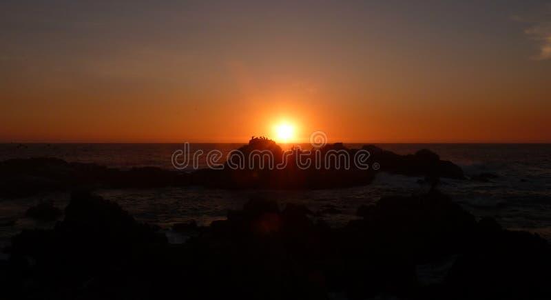 Pellicani al tramonto fotografie stock libere da diritti